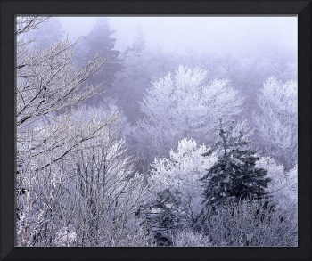 Icey Dawn at Newfound Gap