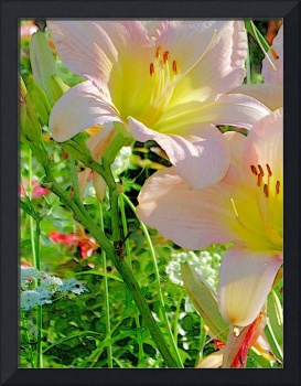 FLOWER Photographic Art Greeting Cards