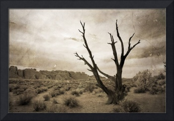 Come Closer and See - Infrared Tree Landscape