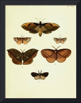 Butterfiles from Asia, Africa and America, Amsteld