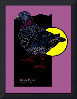 Rock Dove and Full Moon