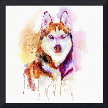Husky Dog Watercolor Portrait