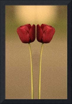Two of a Kind Tulip Reflection