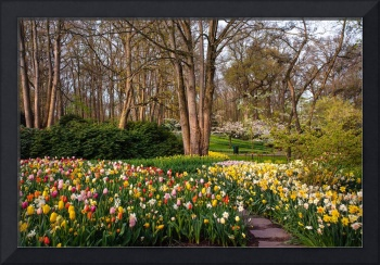 Colorful World of Keukenhof. Motley Flower Beds 2