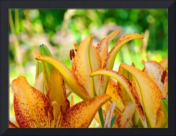 Lilies art print Orange Lily Flowers Botanical