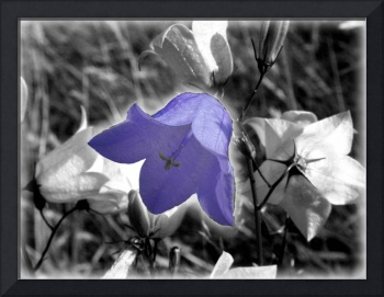Blue Flower Shade