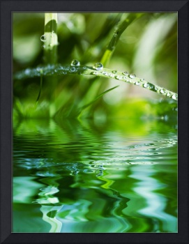 Green Water Reflections