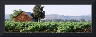 Old barn in a vineyard