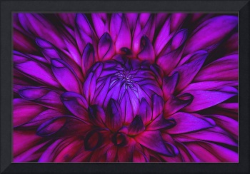 Pop Art Dahlia Flower