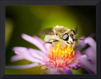 Stinging Insect on Flower