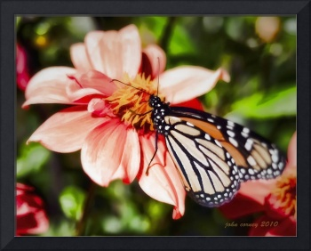 Dahlia Flowers and Monarch Butterfly