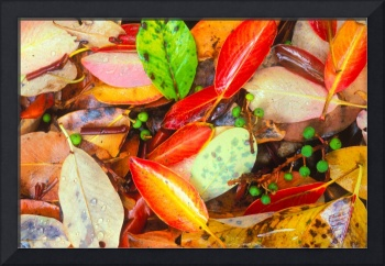 Madrona leaves and berries