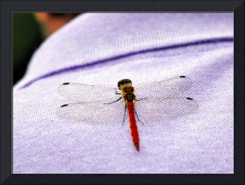 The Dragonfly On The Old Woman's Polo