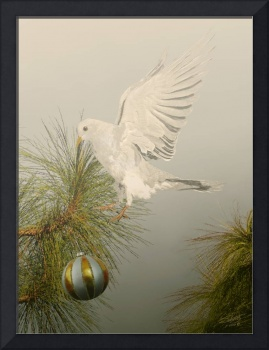 Christams Dove