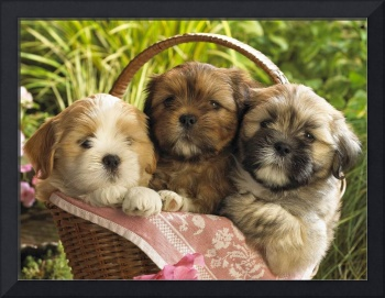 Cute Terrier Puppies In A Basket