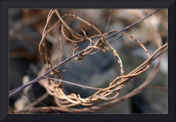Twisted vines
