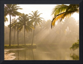 Palm Trees And Sunbeams, Kerala, India
