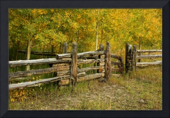 Split Rail Fence and Aspens