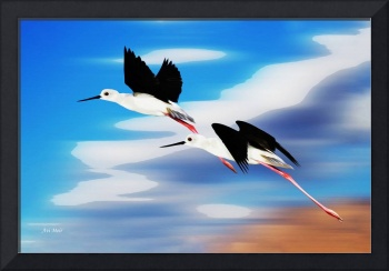 013 Black-winged Stilts
