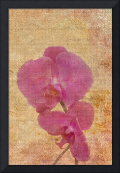 Mosaic of Orchids