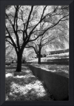 Infrared Black and White Trees