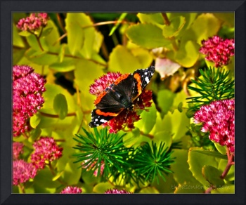 Orange and Black Butterfly on Verdant Flora