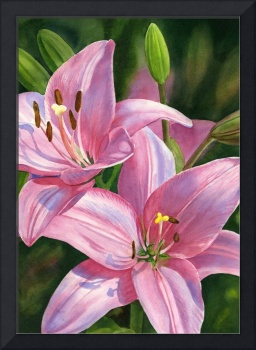 two brilliant pink lilies with buds