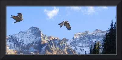 golden eagles mountain sky scape