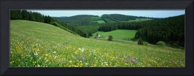 Wildflowers Black Forest Germany