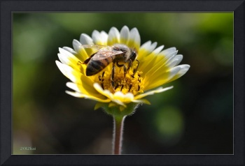 Busy Bee on a Yellow Flower