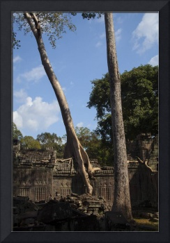 Siem Reap Temple Tree