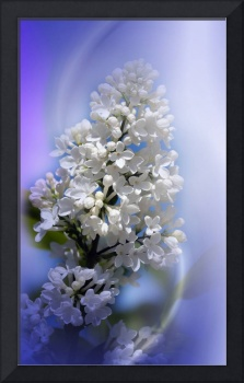 flowers on texture - white lilacs