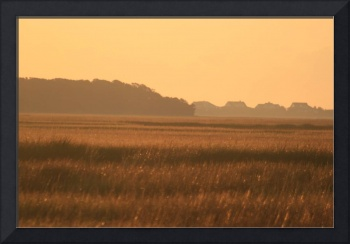 Golden Marshes
