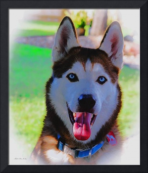 Expressive Husky Photo A62117D