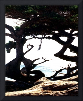 Abstract Tree At Monterey