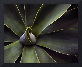 Plant in Abstract