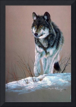 Wolf Artistic Study