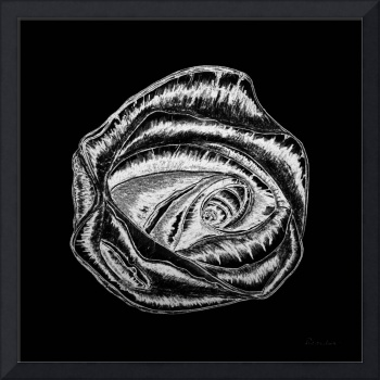 Expressive Rose Black and White A0216B