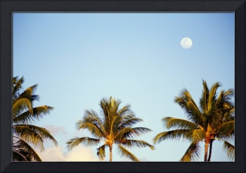 Hawaii, Tall Palm Trees Against Blue Sky, Full Moo