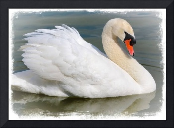 Demure Swan with Border