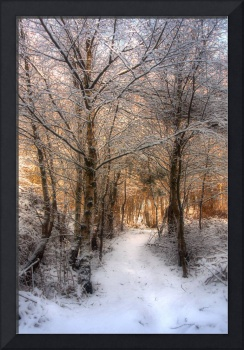 Deer Path in the Snow