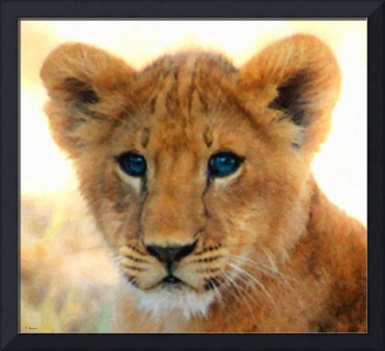 Blue Eyed Beauty - Lion Cub