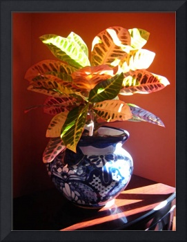 Croton Plant in Talavera Pot