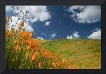 Poppies and Hillside