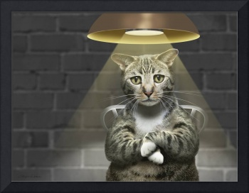 Funny photo of guilty tabby cat interrogation
