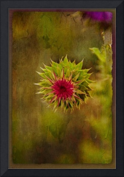Thistle with Friend