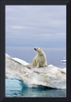 Polar bear sits atop an iceberg floating in the Be