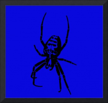 Spider - Black & Blue 2