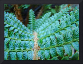 FERN Art Green Forest Fern Giclee Prints Baslee