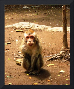 Chained monkey